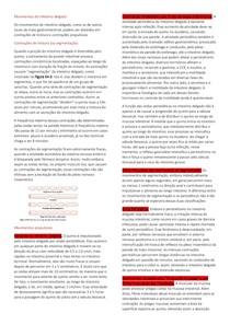 Fisiologia- Intestino Delgado