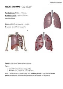 Sist Respiratório - Pleura e pulmão