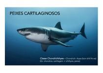 05_Peixes_cartilaginosos_compressed