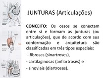 Anatomia Geral - Junturas MMii, Cranio, Coluna