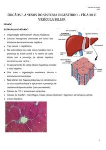 ÓRGÃOS E ANEXOS DO SISTEMA DIGESTÓRIO FÍGADO E VESÍCULA BILIAR Patologia