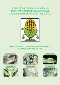 Sinais de doenças Nutricionais no Milho