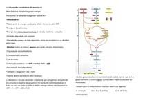 Organelas transdutoras de energia