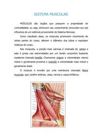 anatomia músculos