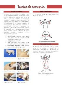 Técnica de necropsia veterinária- passo a passo