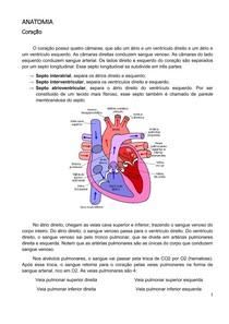 Anatomia   Célio   Coração