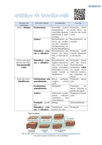 Histologia - Tabela de Epitélios de Revestimento - @stdylari vet