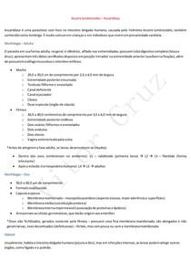 Ascaris lumbricoides - Ascaridíase