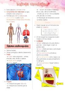 Sistema Circulatório - Cardiovascular e Linfático