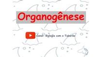 Organogênese - Embriologia - Formação dos tecidos e órgãos