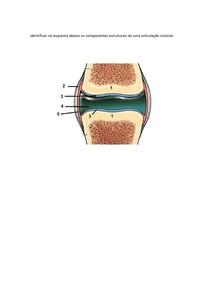 Exercício _cartilagem