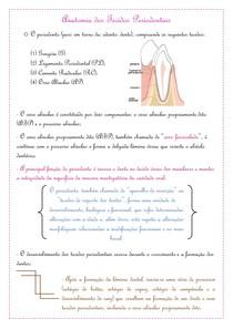 Anatomia do Periodonto