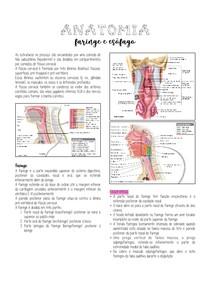 Anatomia - Faringe e esôfago
