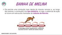 CONDUÇÃO SALTATÓRIA - BAINHA DE MIELINA