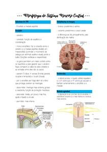 Morfologia do Sistema Nervoso Central