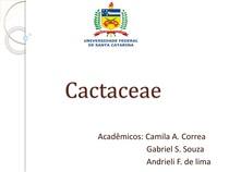 Informações sobre a Família Cactaceae