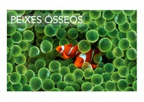 06_Peixes_osseos_compressed