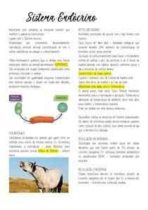Sistema Endócrino e Sistema Nervoso