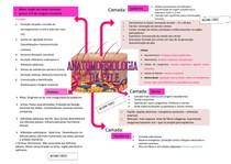ANATOMOFISIOLOGIA DA PELE