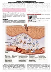 O processo inflamatório no corpo humano