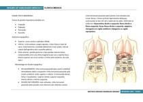 Semiologia abdominal - Clínica Médica