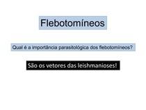 flebotomineos (1)