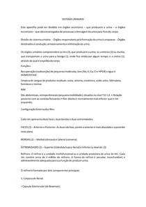 Sistema urinário e endócrino