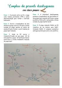Complexo da piruvato desidrogenase em 5 passos