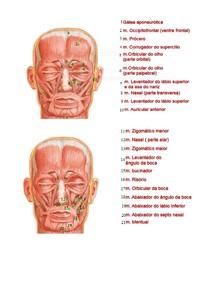 Músculos (Face e Pescoço)
