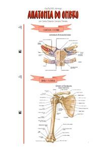 [03 05 2020] Anatomia do Ombro