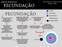Mapa Conceitual FECUNDACAO
