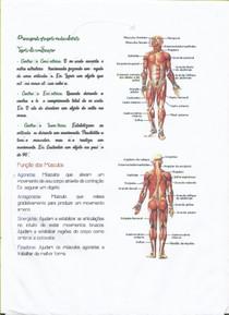 Principais Grupos Musculares