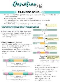 Genética 06 - Transposons