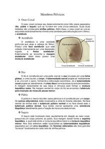 Membros Pélvicos do Equino(Osteologia)
