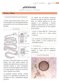 Platelmintos (Taenia solium, Taenia saginata, Teníase, Cisticercose, Ciclos) - Parasitologia