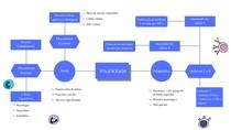 Mapa mental: Imunidade inata e adaptativa - Imunologia