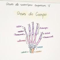 ossos do carpo