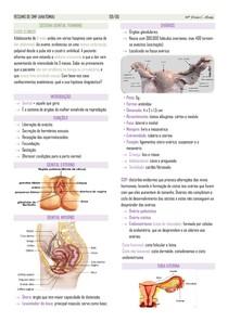 Anatomia do sistema genital feminino