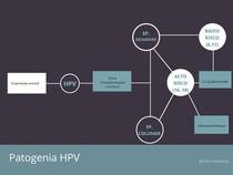 Patogenia HPV