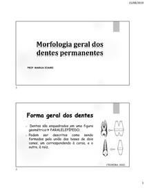 morfologia dos dentes permanentes