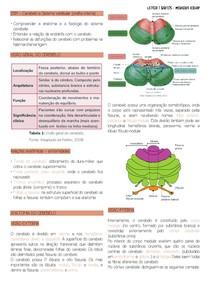 Cerebelo e Aparelho vestibular