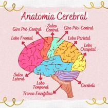 Anatomia Cerebral - @biaresumosdafisio