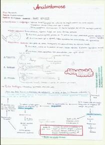 ANCILOSTOMOSE1