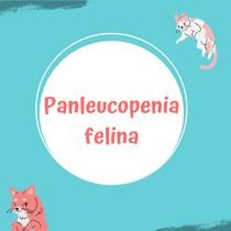 Panleucopenia