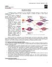 Resumo de Patologia - Inflamação Crônica