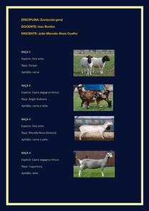 Lista de raças (ovinos e caprinos)