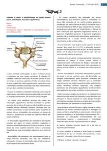 Morfofisiologia coluna cervical e Cervicalgias