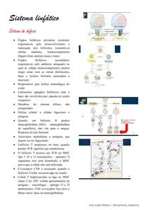 histologia do sistema linfático