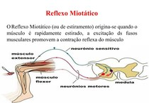 2 - Fisiologia Geral - muscular