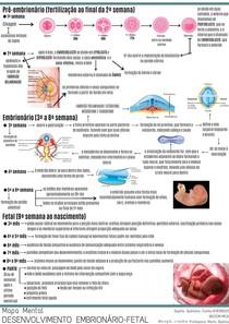 Mapa Mental Desenvolvimento Embrionário-Fetal